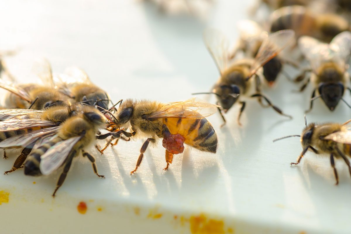 Boda-Méhészet-Miere-Naturala-Boda-Boda-Honey-miere-satu-mare-02-1200x800.jpg