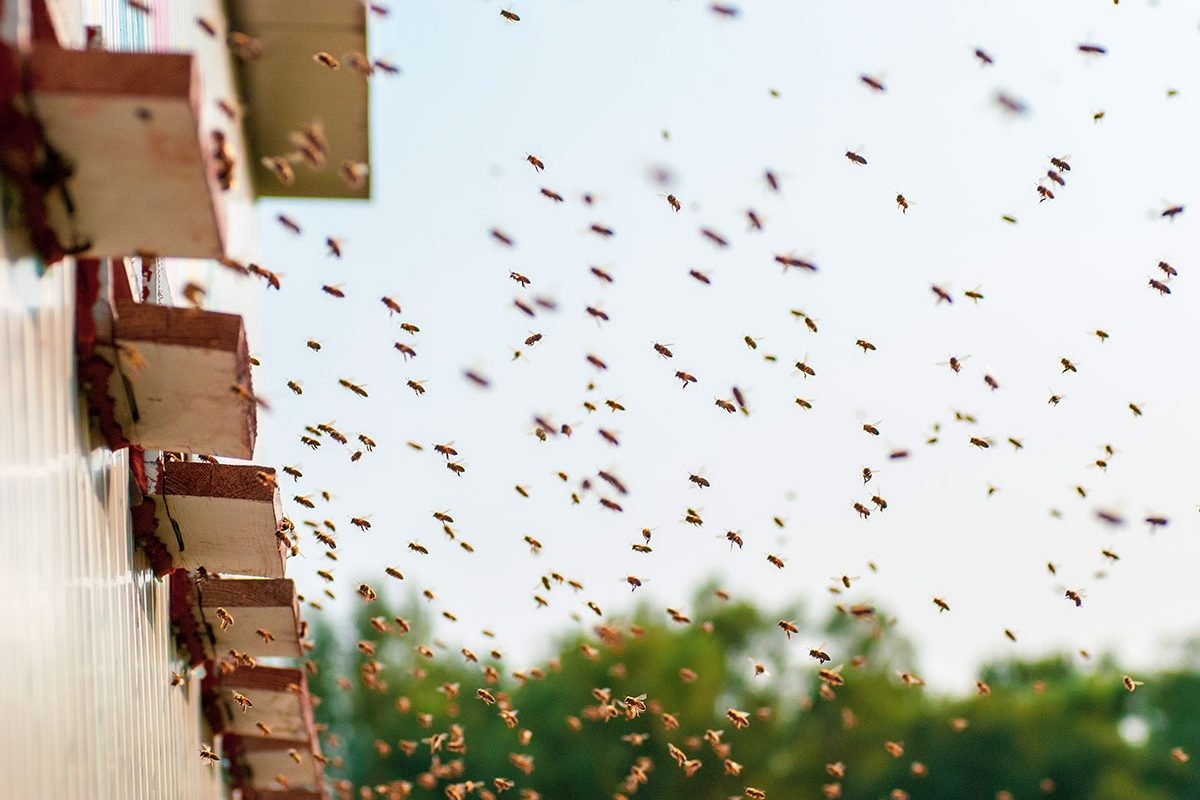 Boda-Méhészet-Miere-Naturala-Boda-Boda-Honey-miere-satu-mare-03-1200x800.jpg